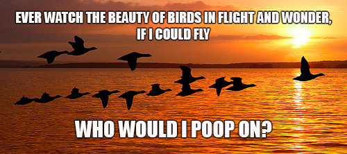 birds-flight-meme.jpg