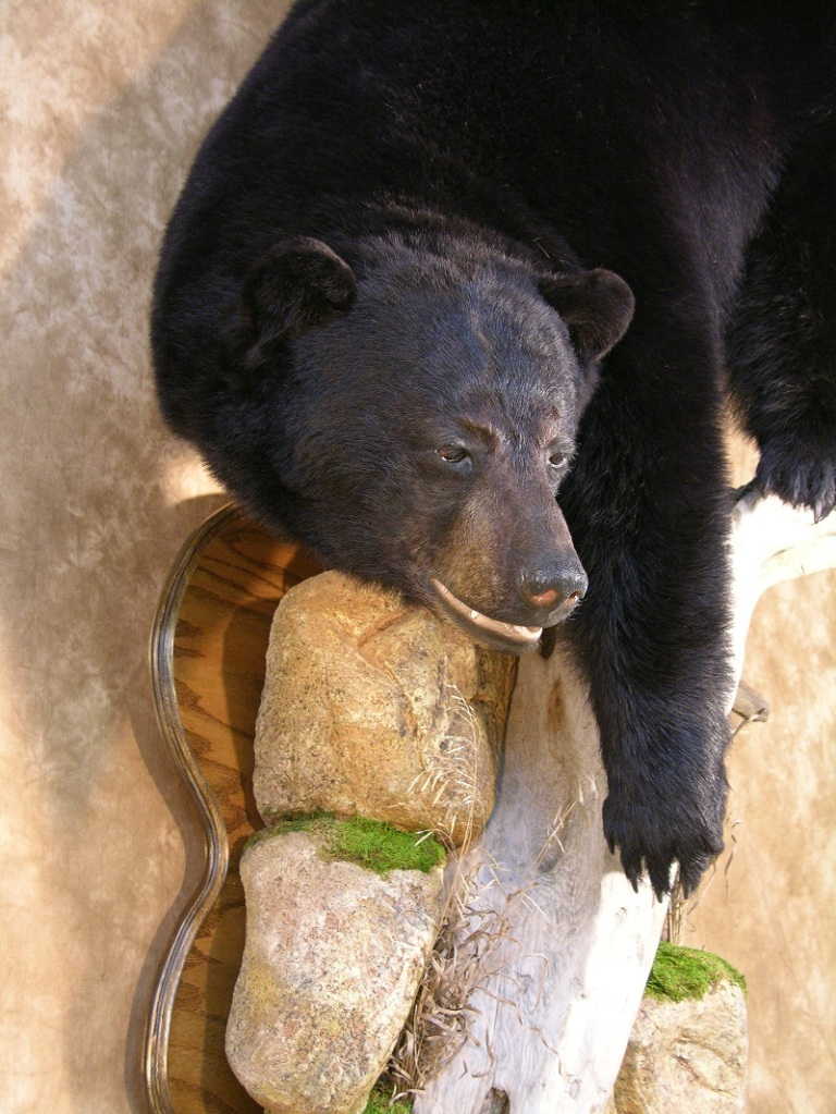 Black_bear_taxidermy_4.jpg