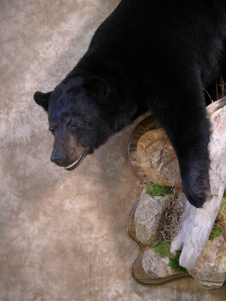 Black_bear_taxidermy_5.jpg