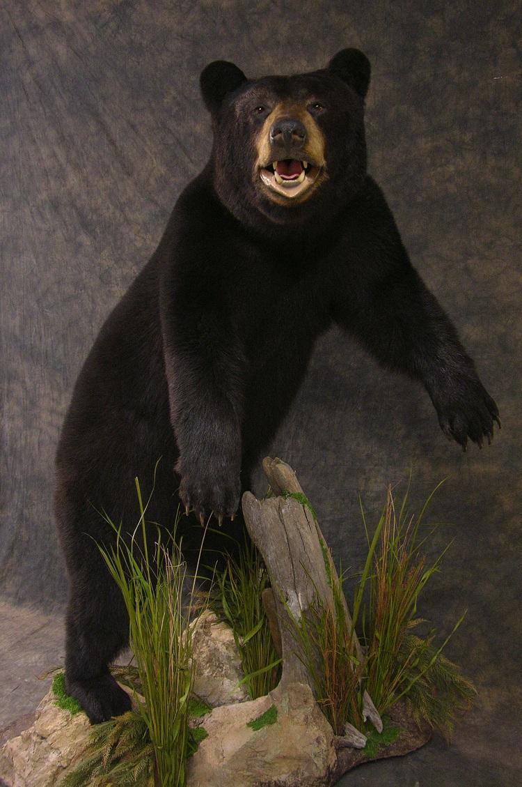 Blackbear_2.jpg