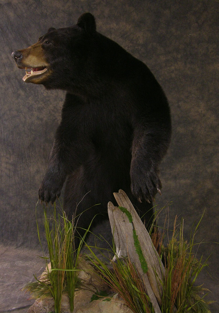 Blackbear_3.jpg