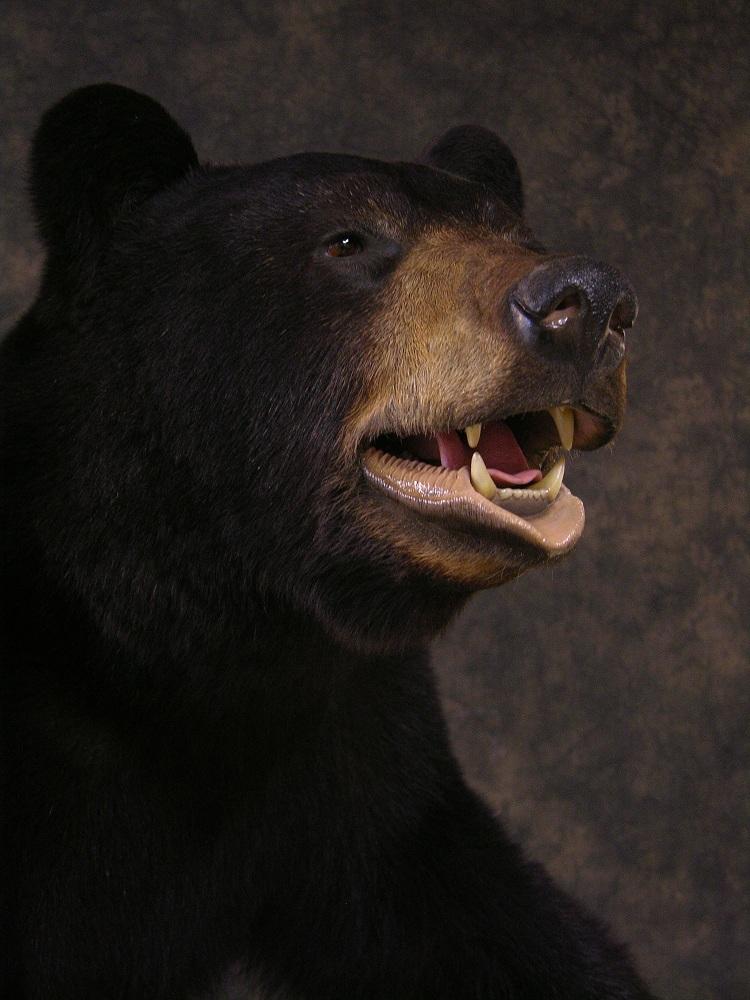 Blackbear_4.jpg