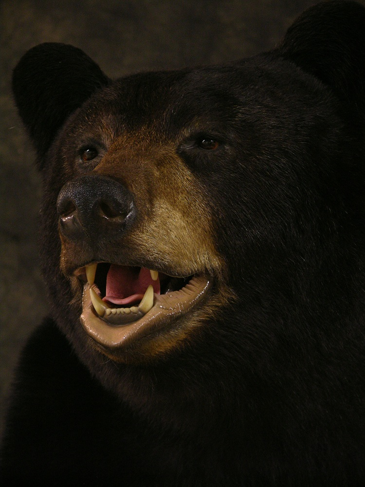 Blackbear_6.jpg