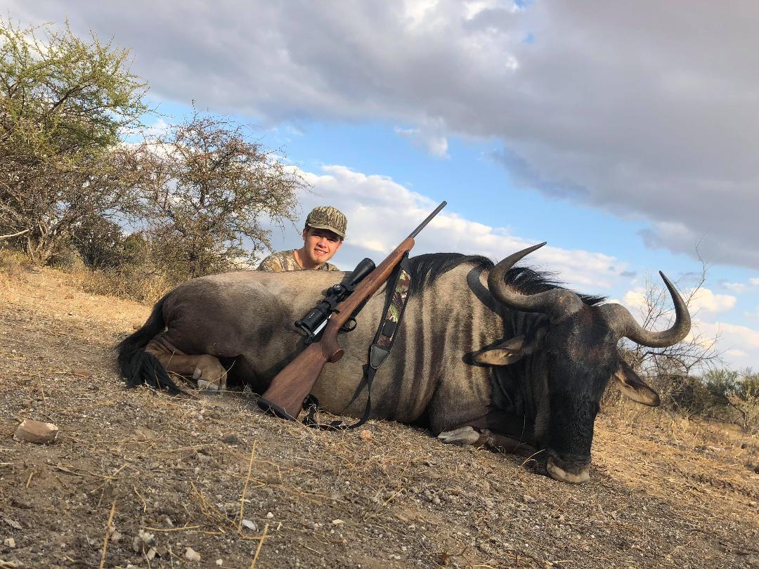 Blue Wildebeest.jpeg