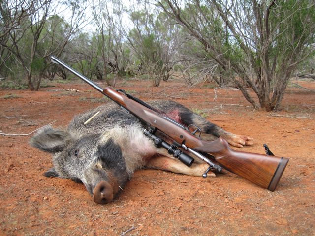 Boar 450 Ackley_1.jpg