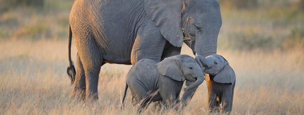 Bos-en-Dal-other-activities-Elephant-Sanctuary.jpg
