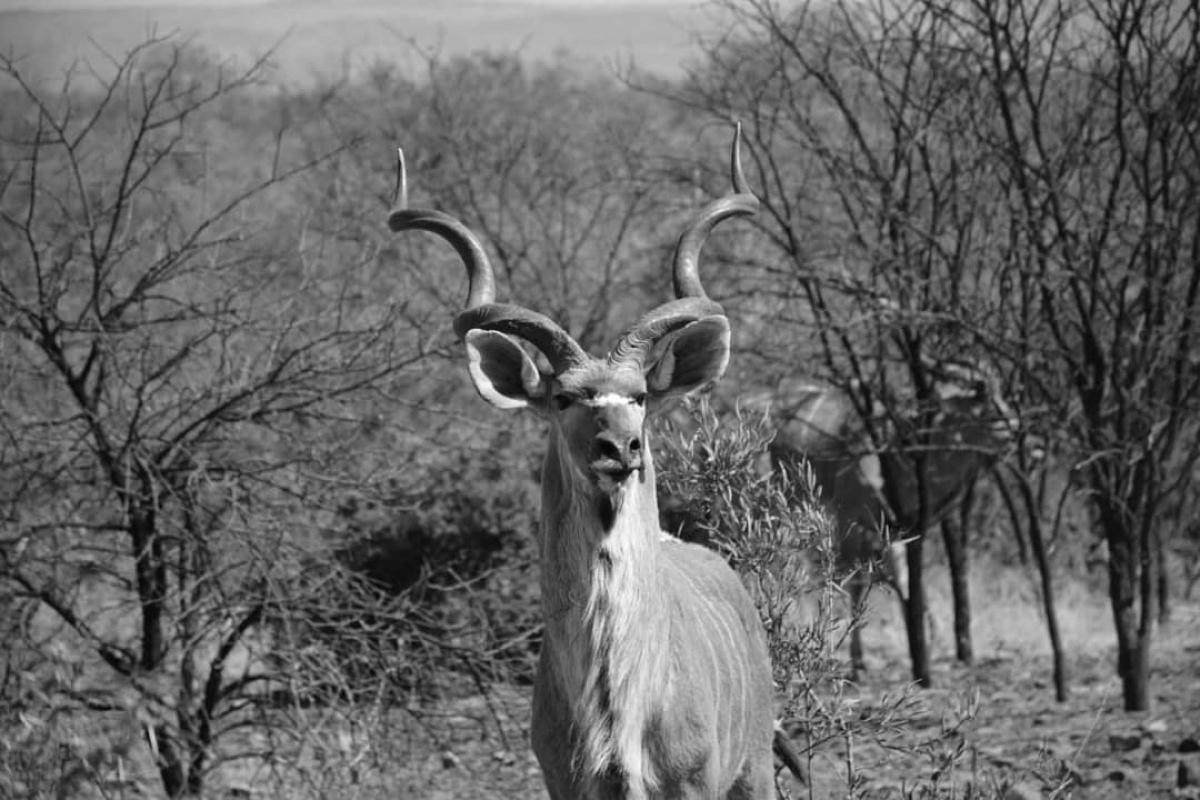 bos-en-dal-safaris-07.jpg