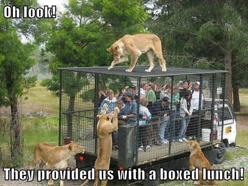 boxed-lunch.jpg