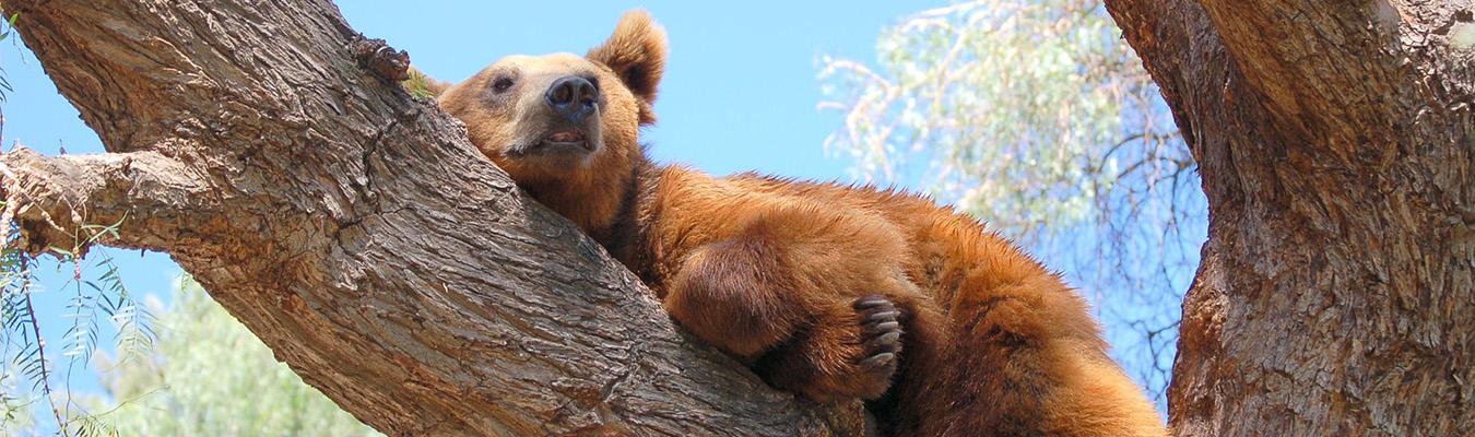 brownbear_1350-PD.jpg
