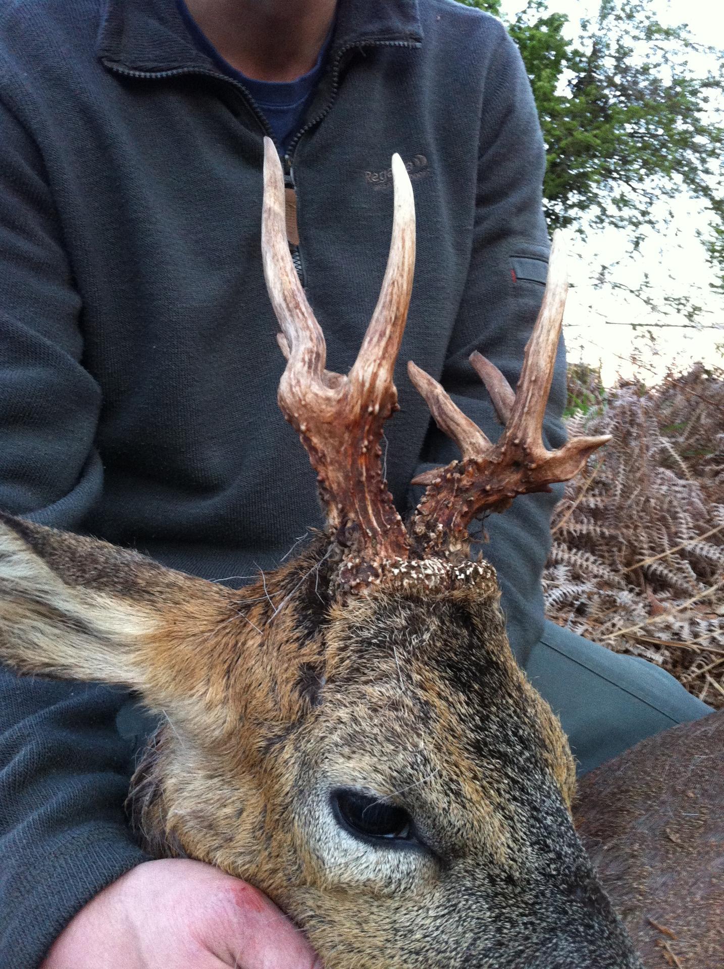 buck 1.jpg