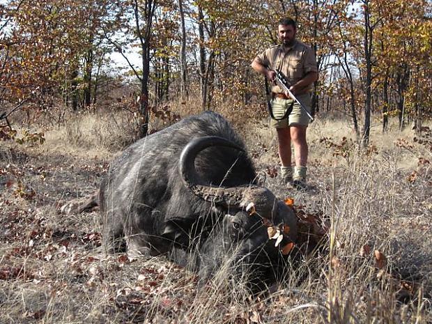 Buffalo Down.jpg