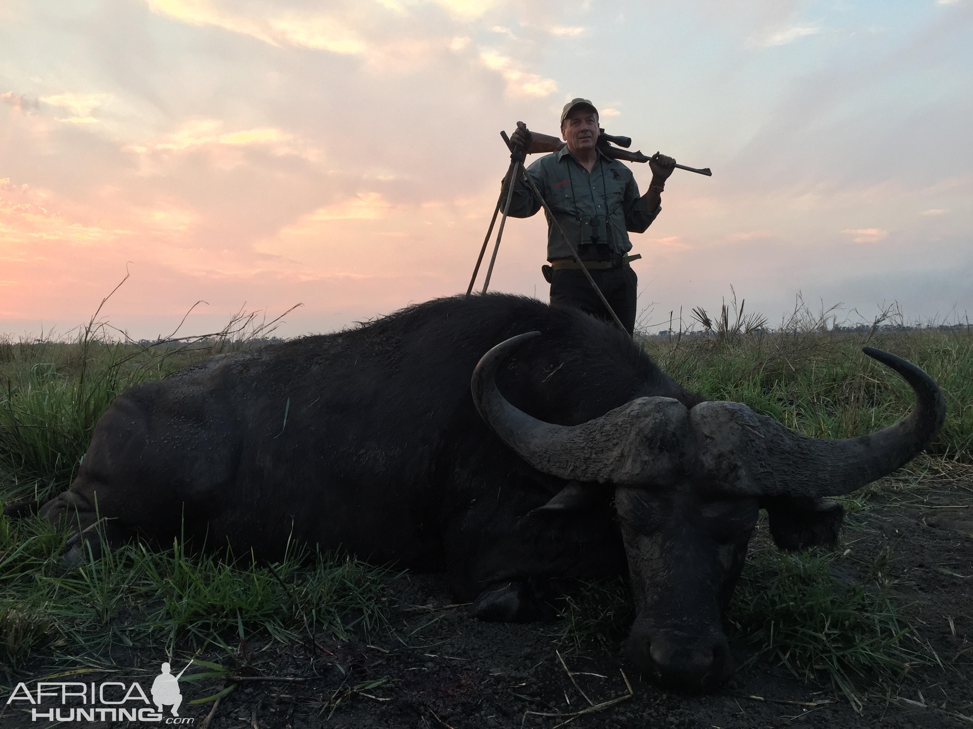 buffalo Mozambique.jpg