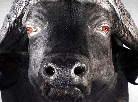 buffalo_straight_shoulder_mount (2).jpg