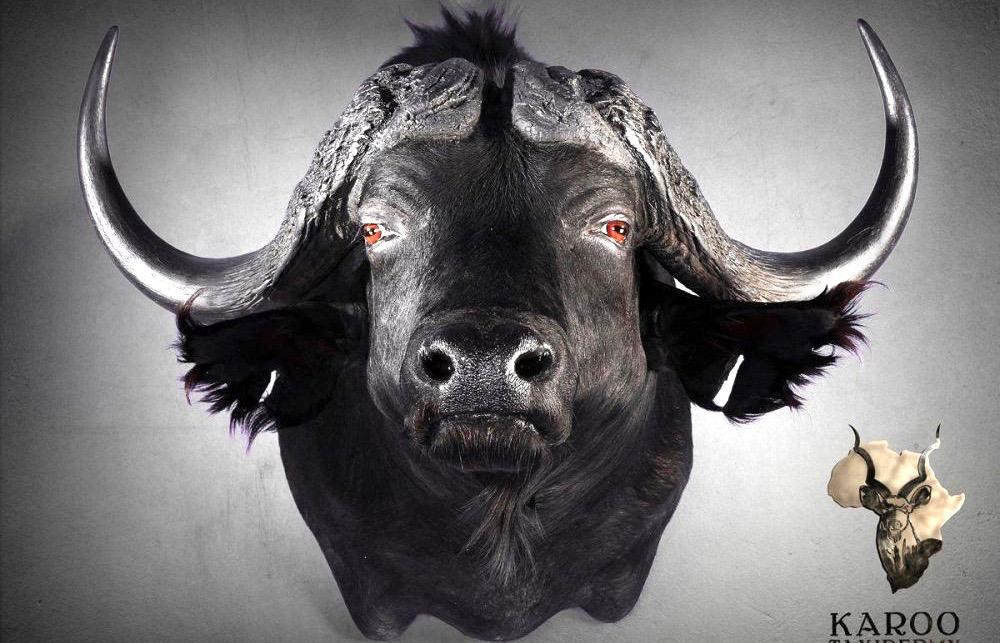 buffalo_straight_shoulder_mount.jpg