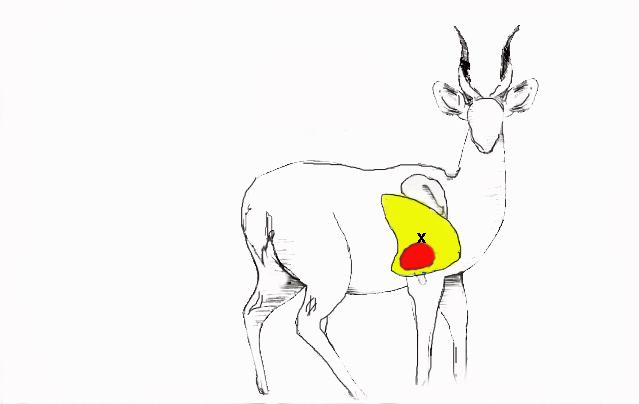 bushbuck target zone copy.jpg