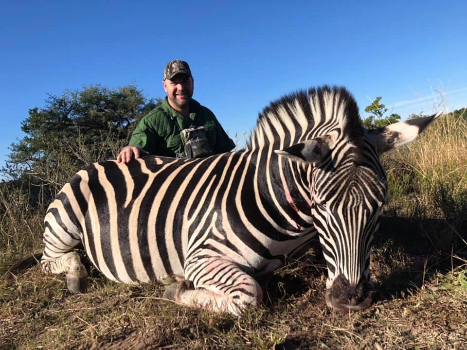 CH Zebra.jpg
