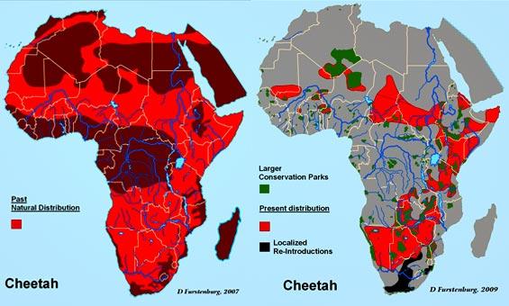 Cheetah-Maps1.jpg