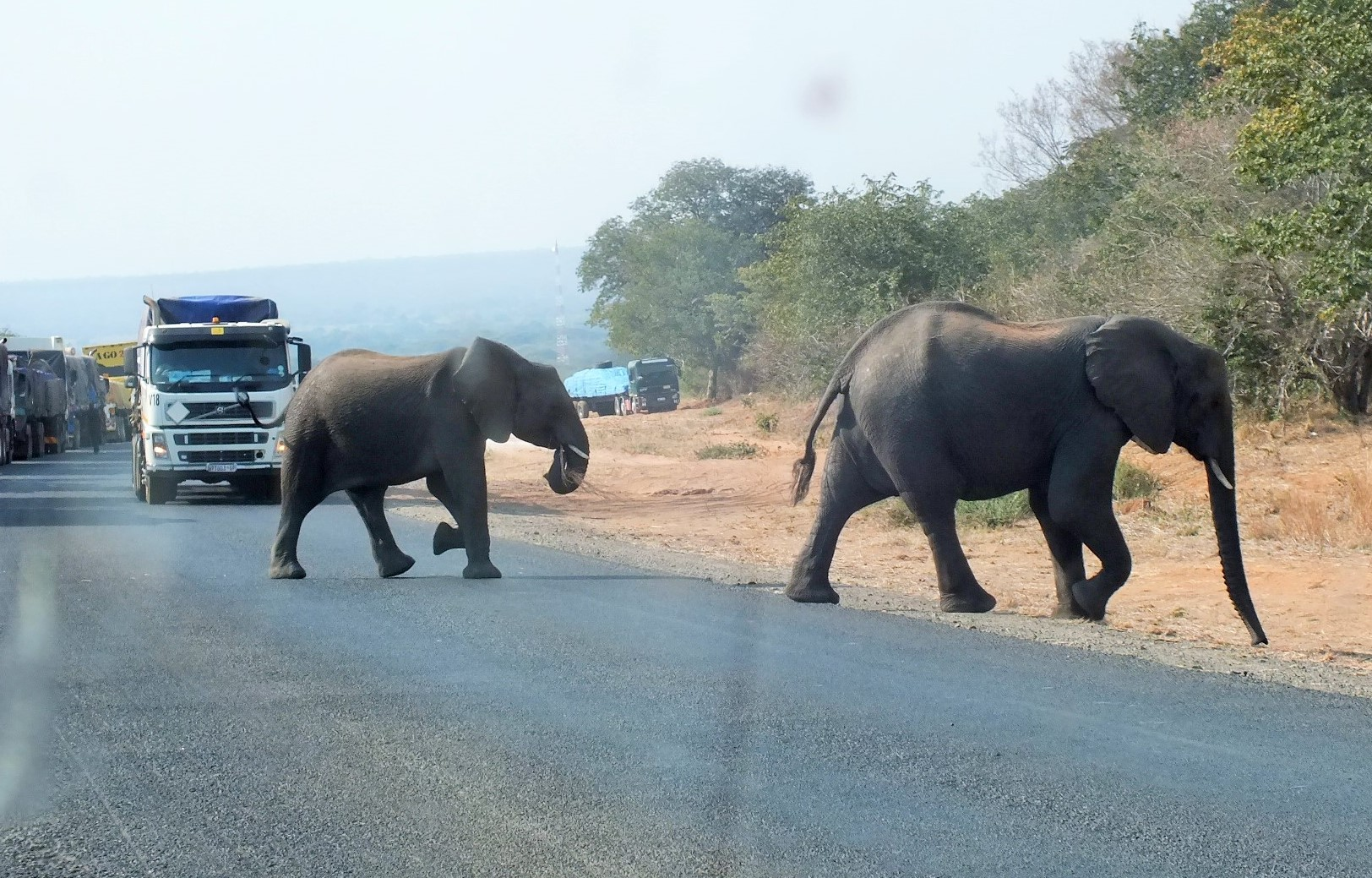 Chobe elephant.JPG
