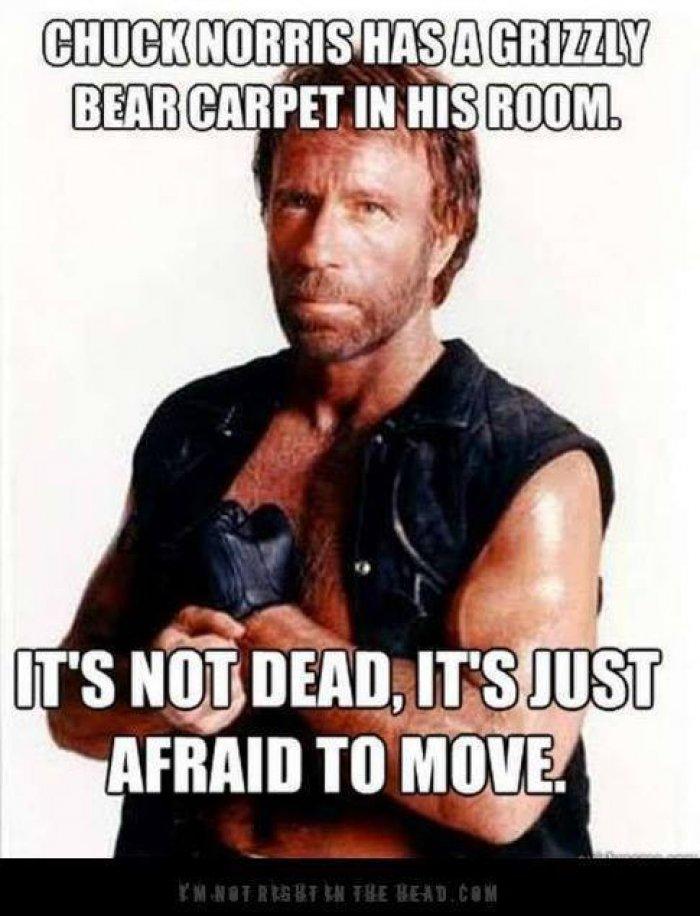 Chuck-norris-has-a-grizzly-bear-carpet-in-his-room-meme.jpg