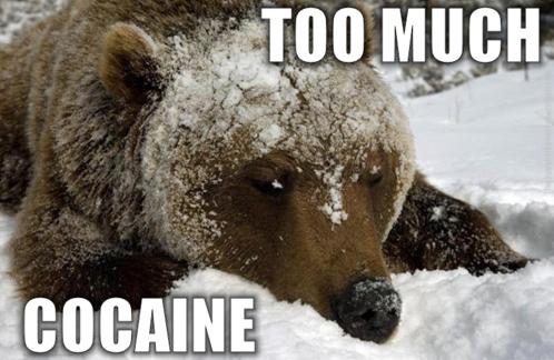 Coke Bear 2.jpg