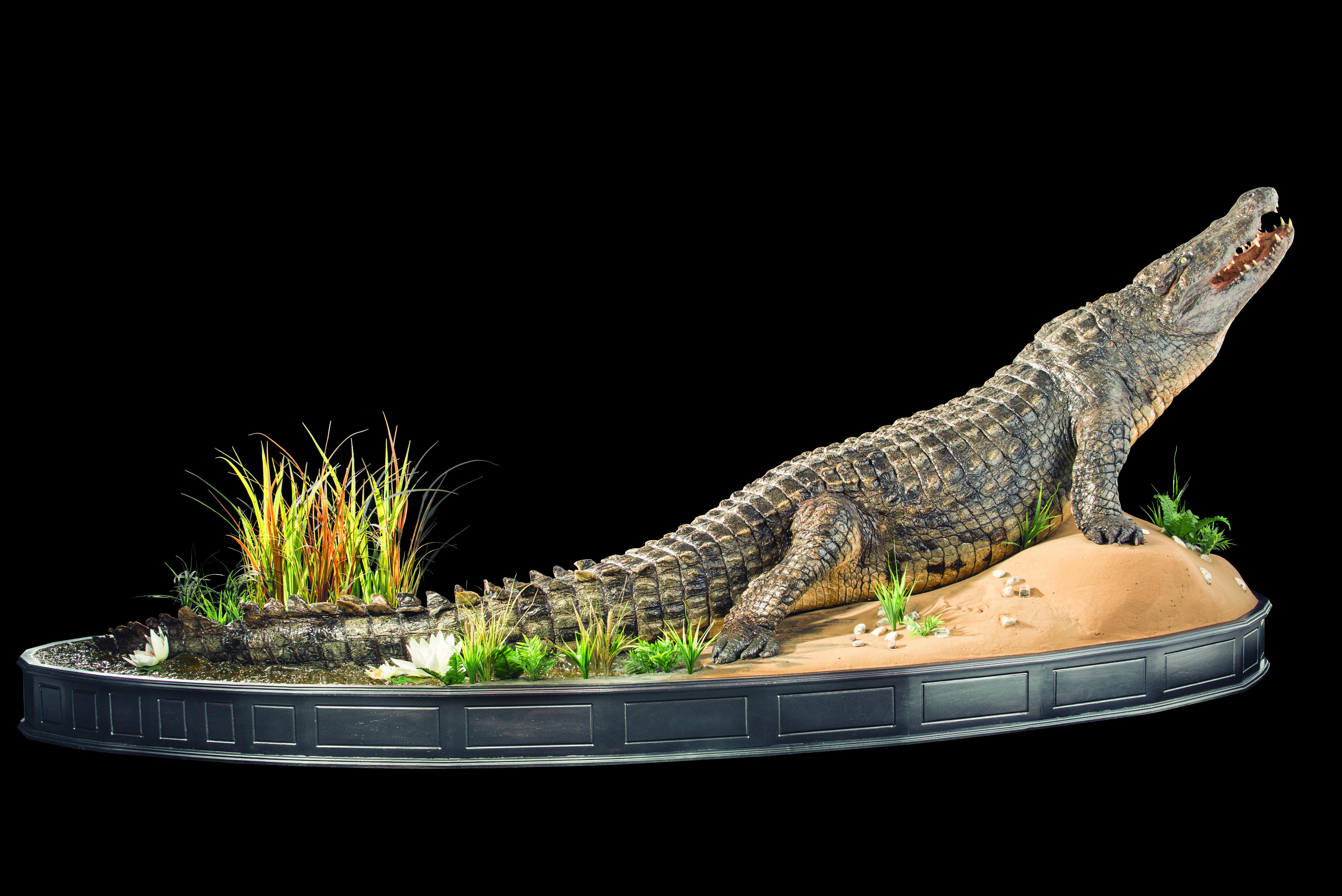 croc-fullmount-ff015-jpg.420882