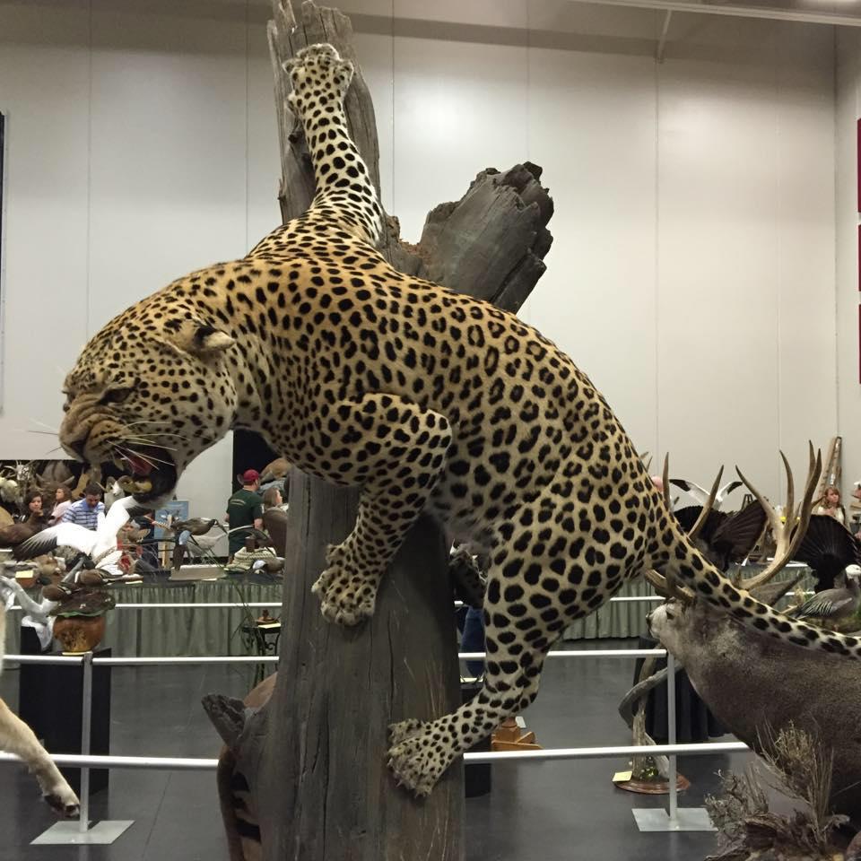 Daniel Meng World Champ Leopard.jpg