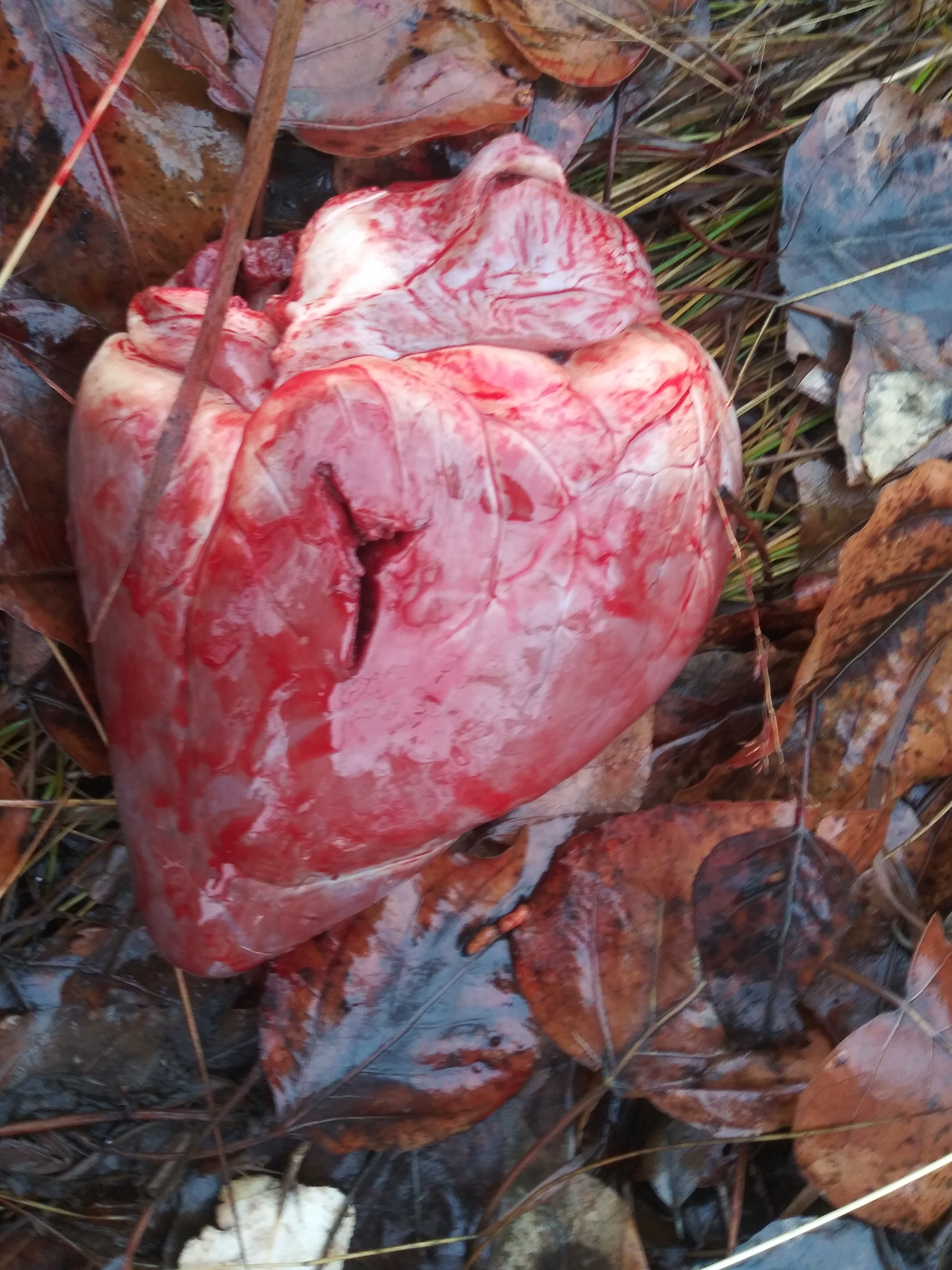 Deer heart.jpg