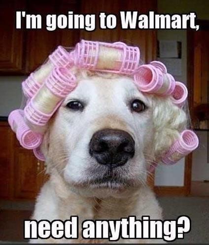 dog_walmart.jpg
