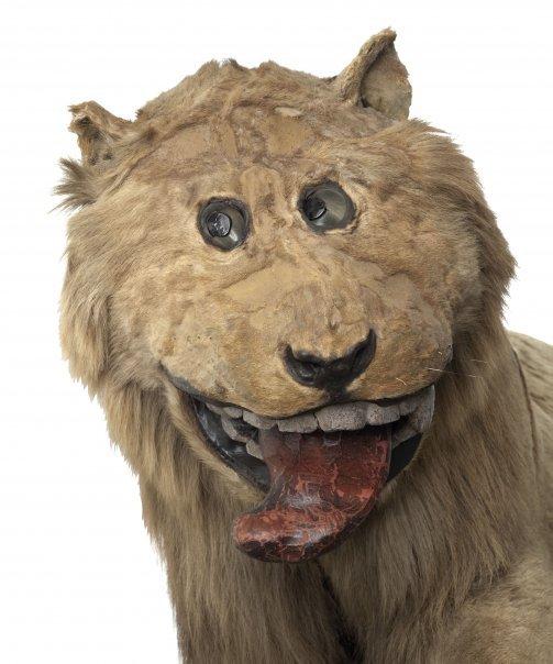 doofy-lion.jpg