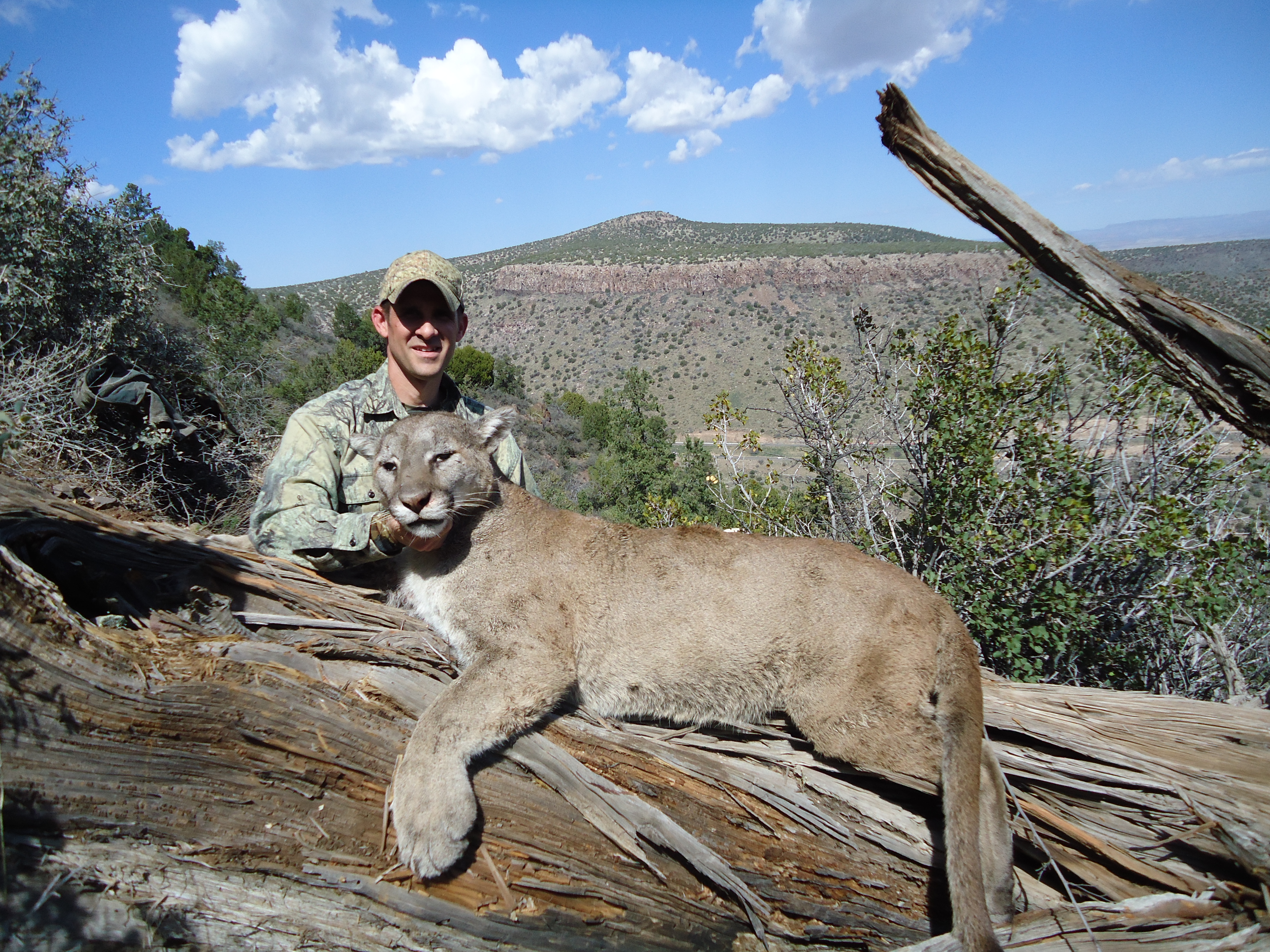 USA: Arizona Dry Ground Mountain Lion Hunt With Seven ...