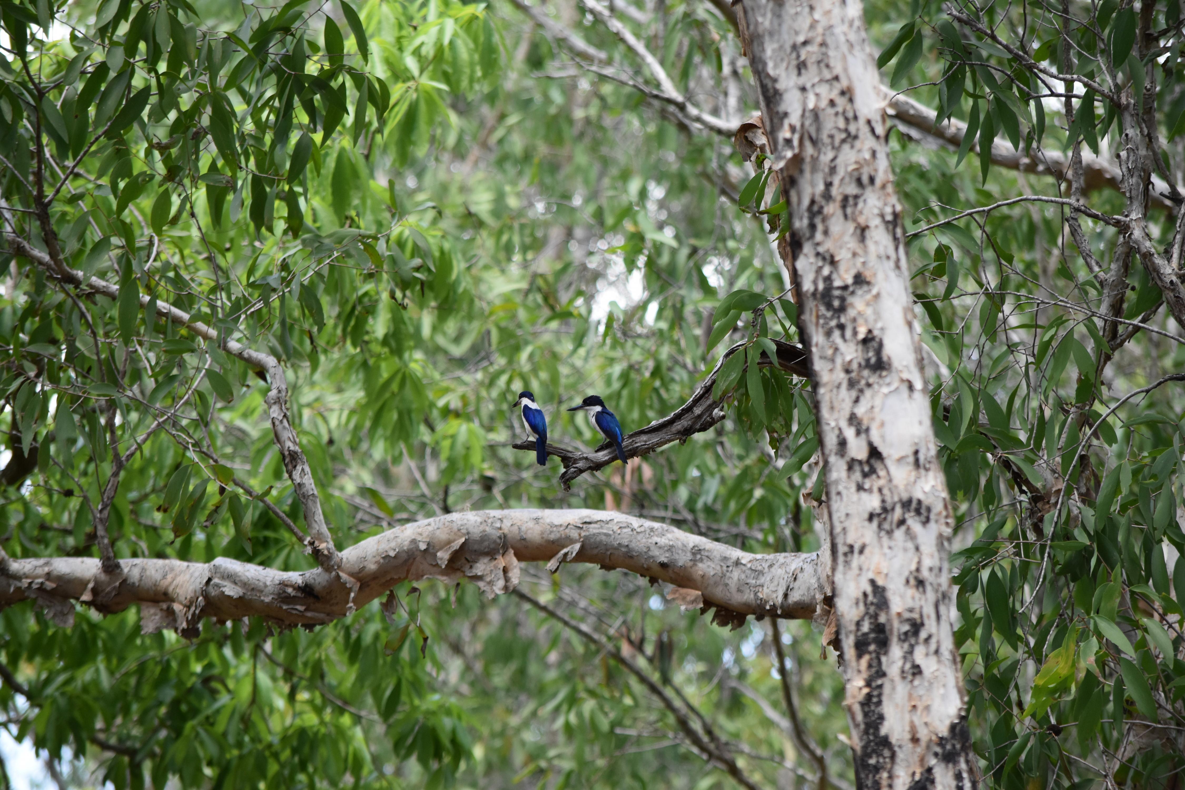 DSC_0152.JPG Pretty birds.JPG