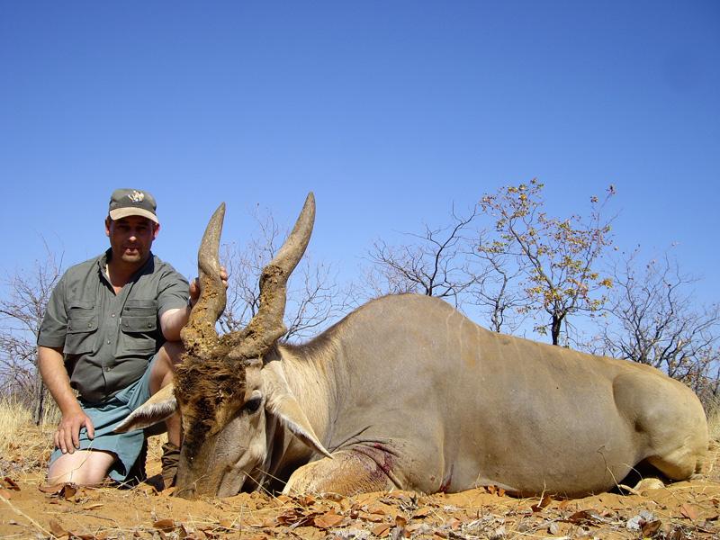 Eland Bull.jpg
