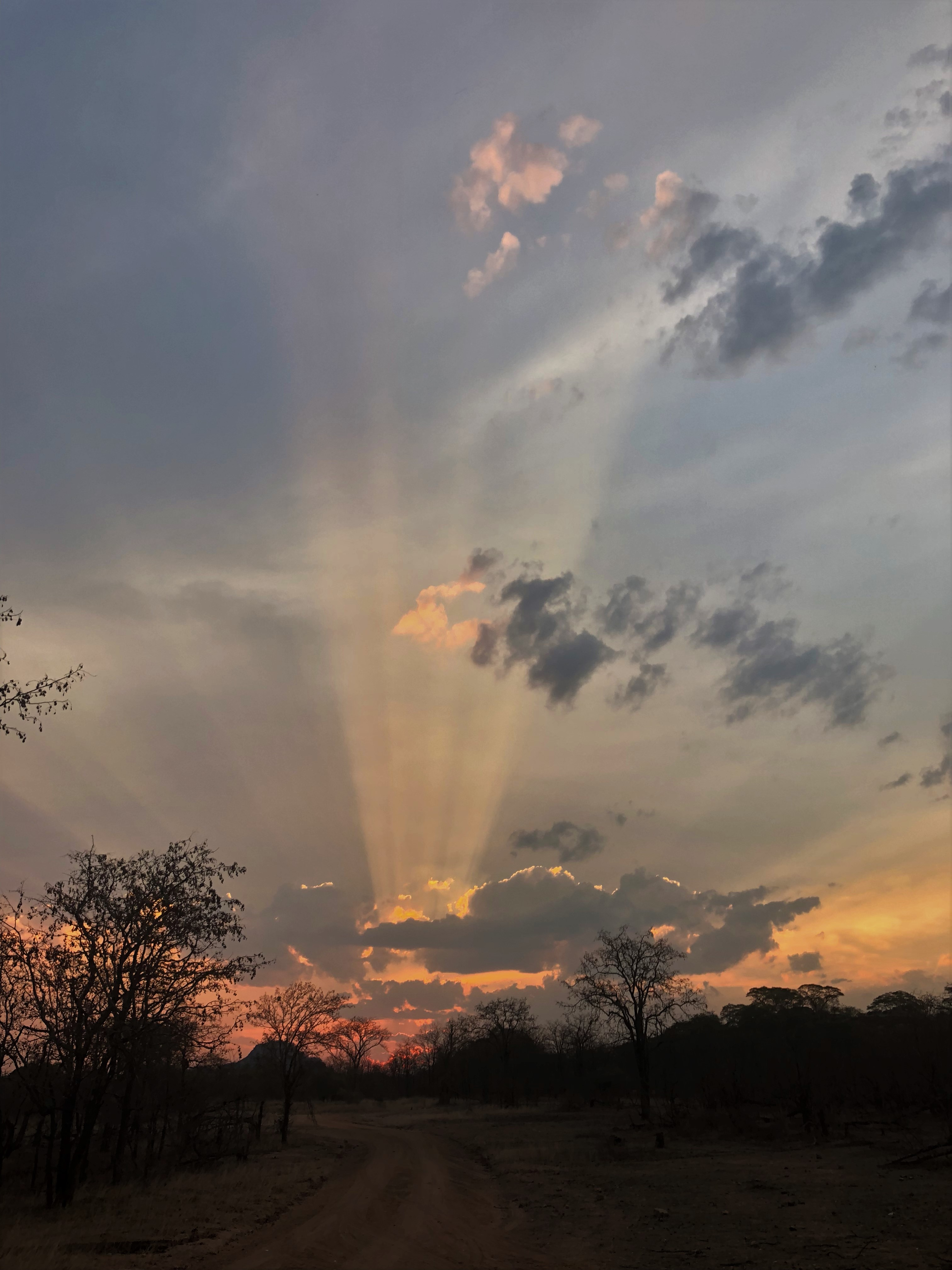 Ele sky.jpg