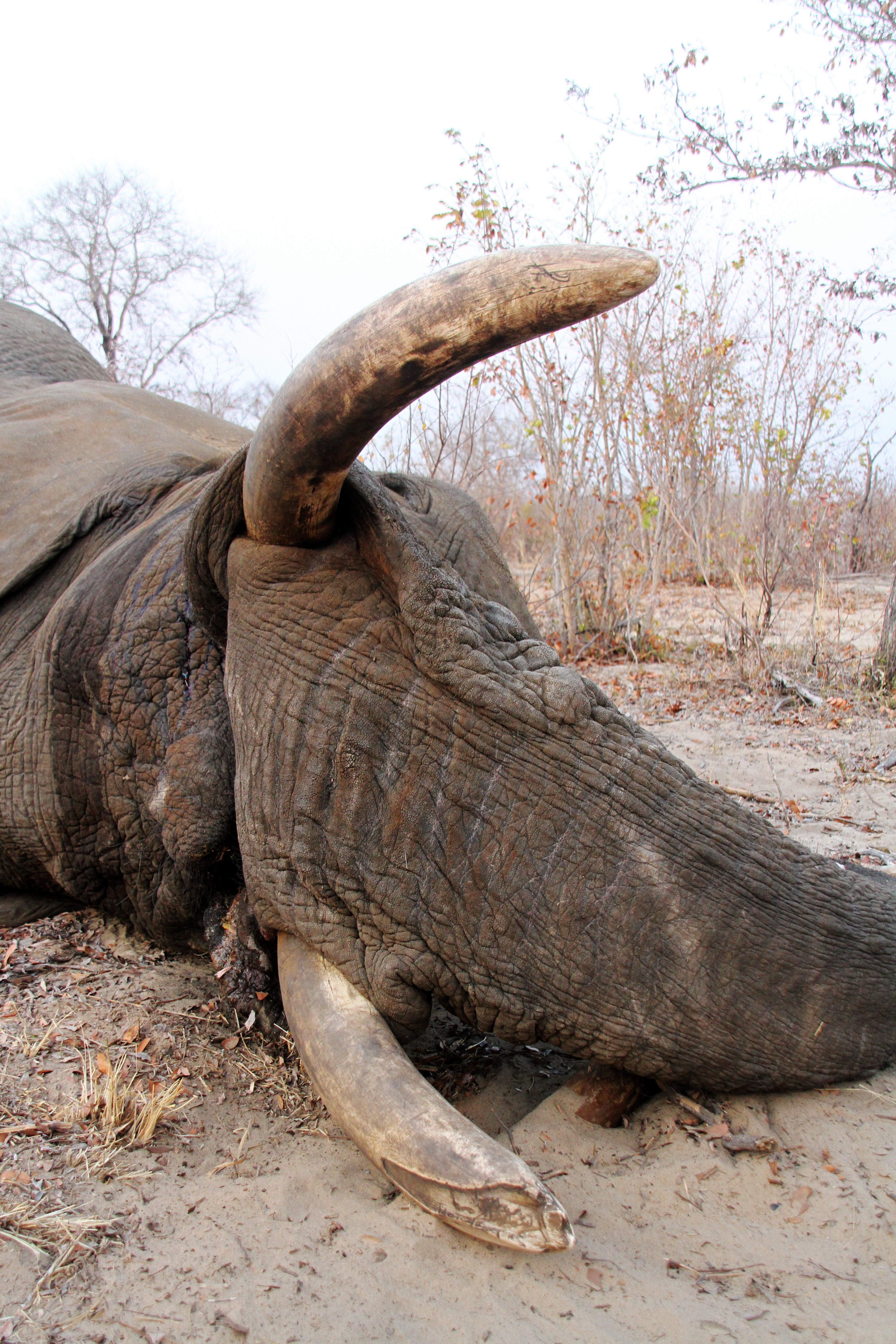 Elephant - 2.JPG