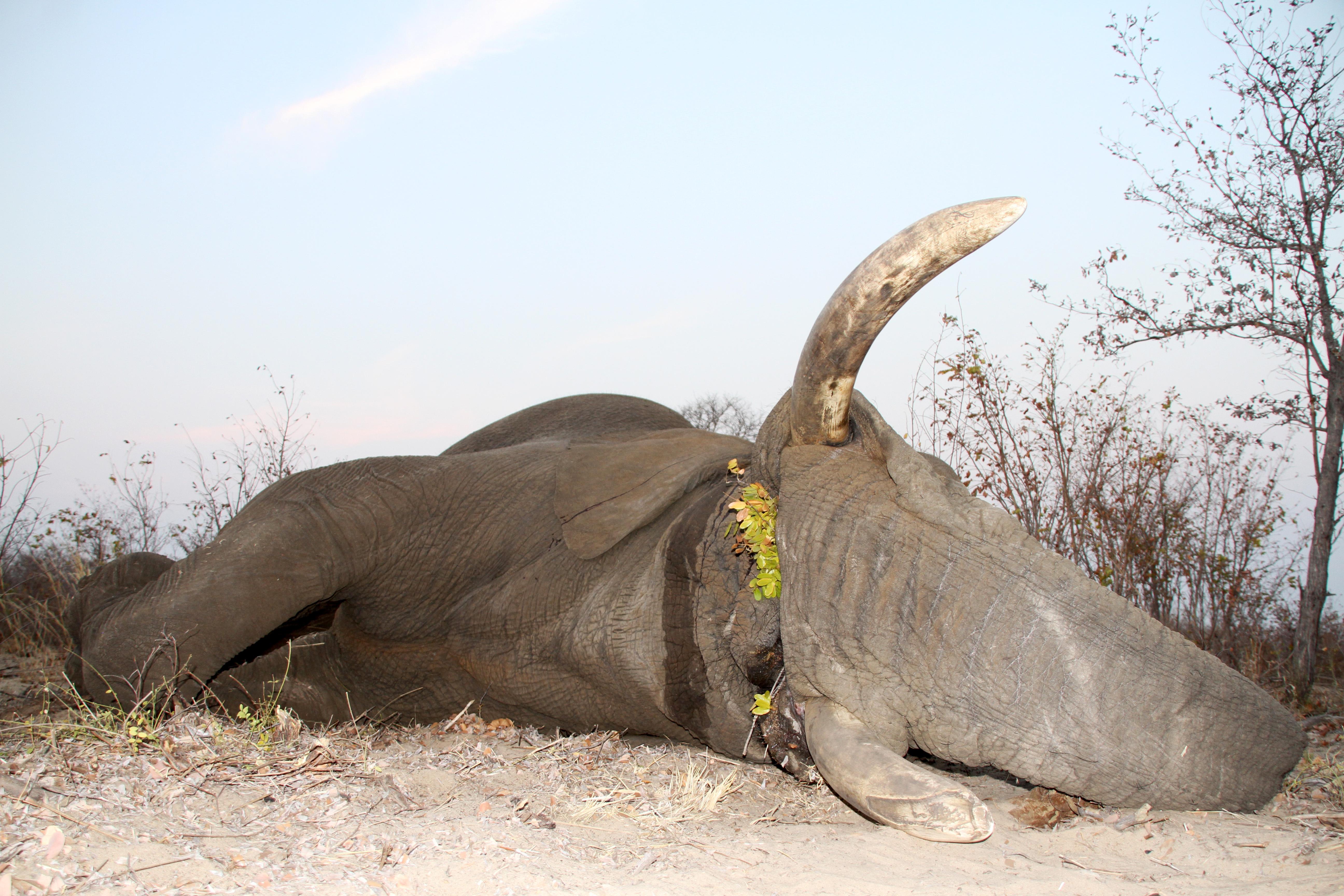 Elephant - 4.JPG