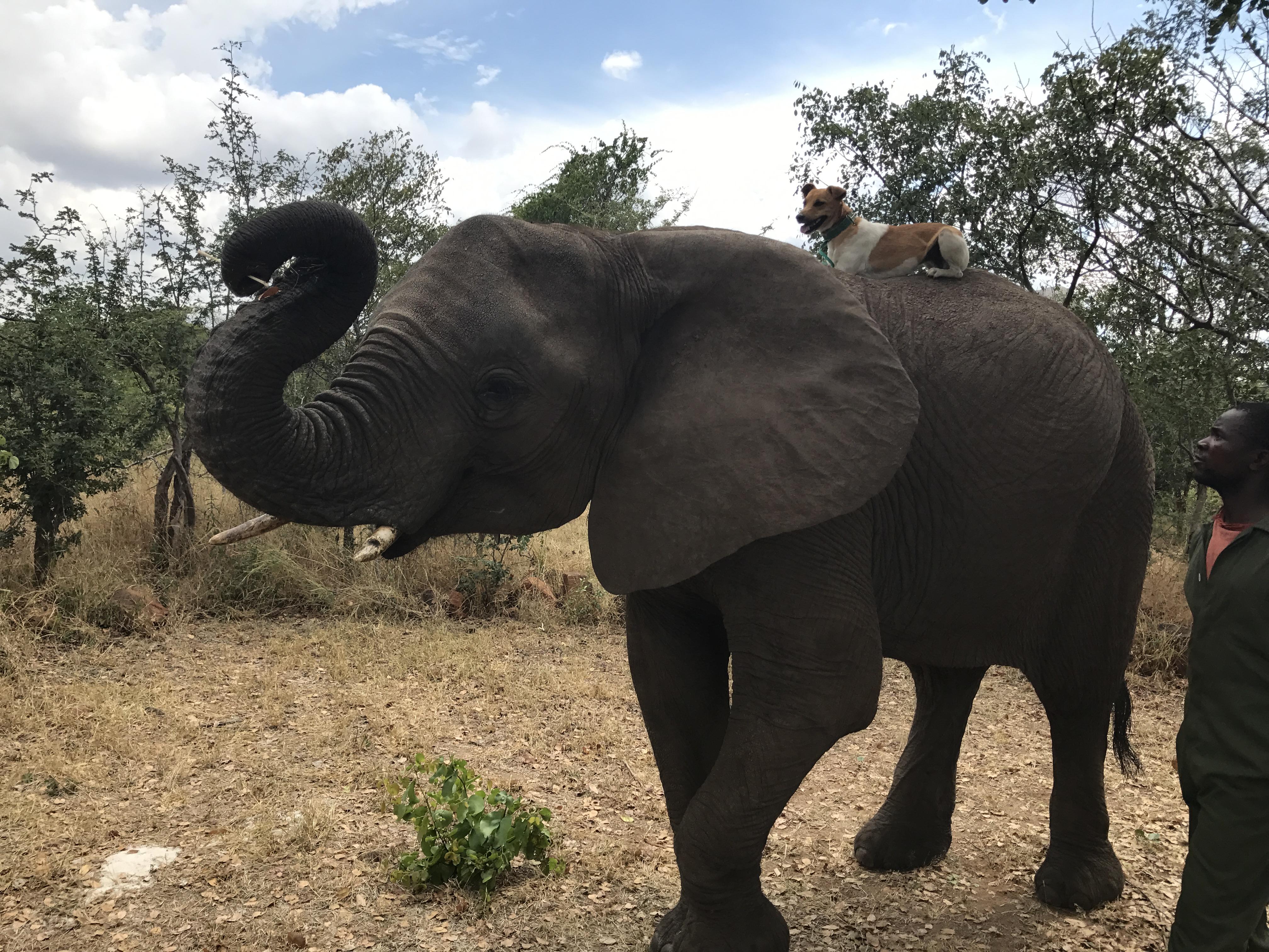 Elephant Dog.jpg