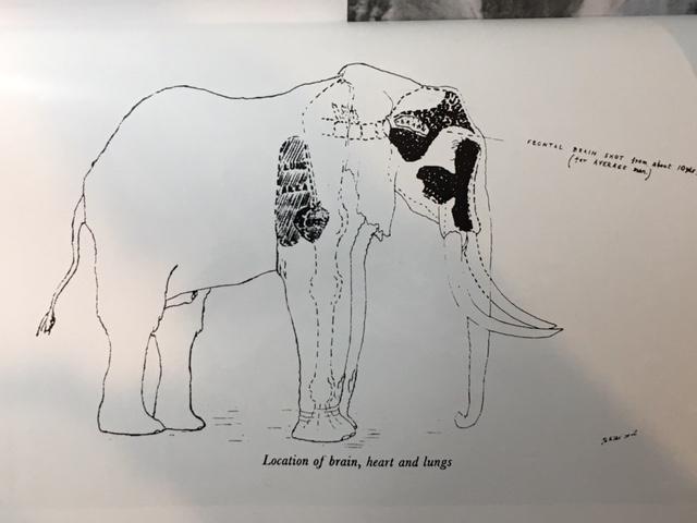elephant frontal shot .JPG