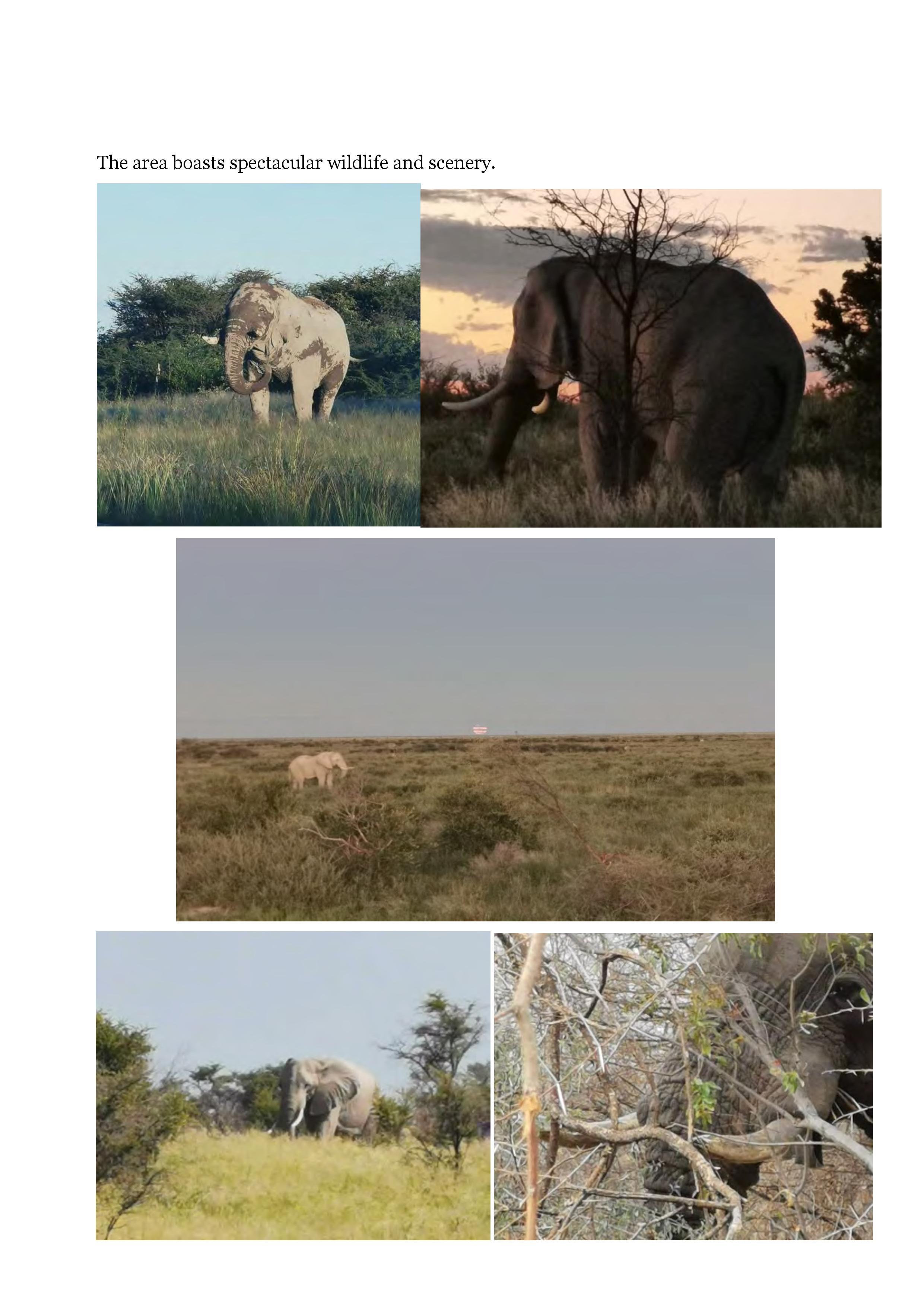 Elephant Hunting NG49 Nkwe-page-004.jpg