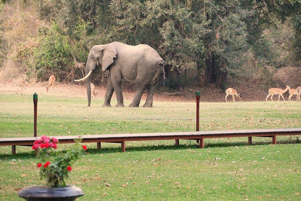 elephant-Mbizi-2019.jpg