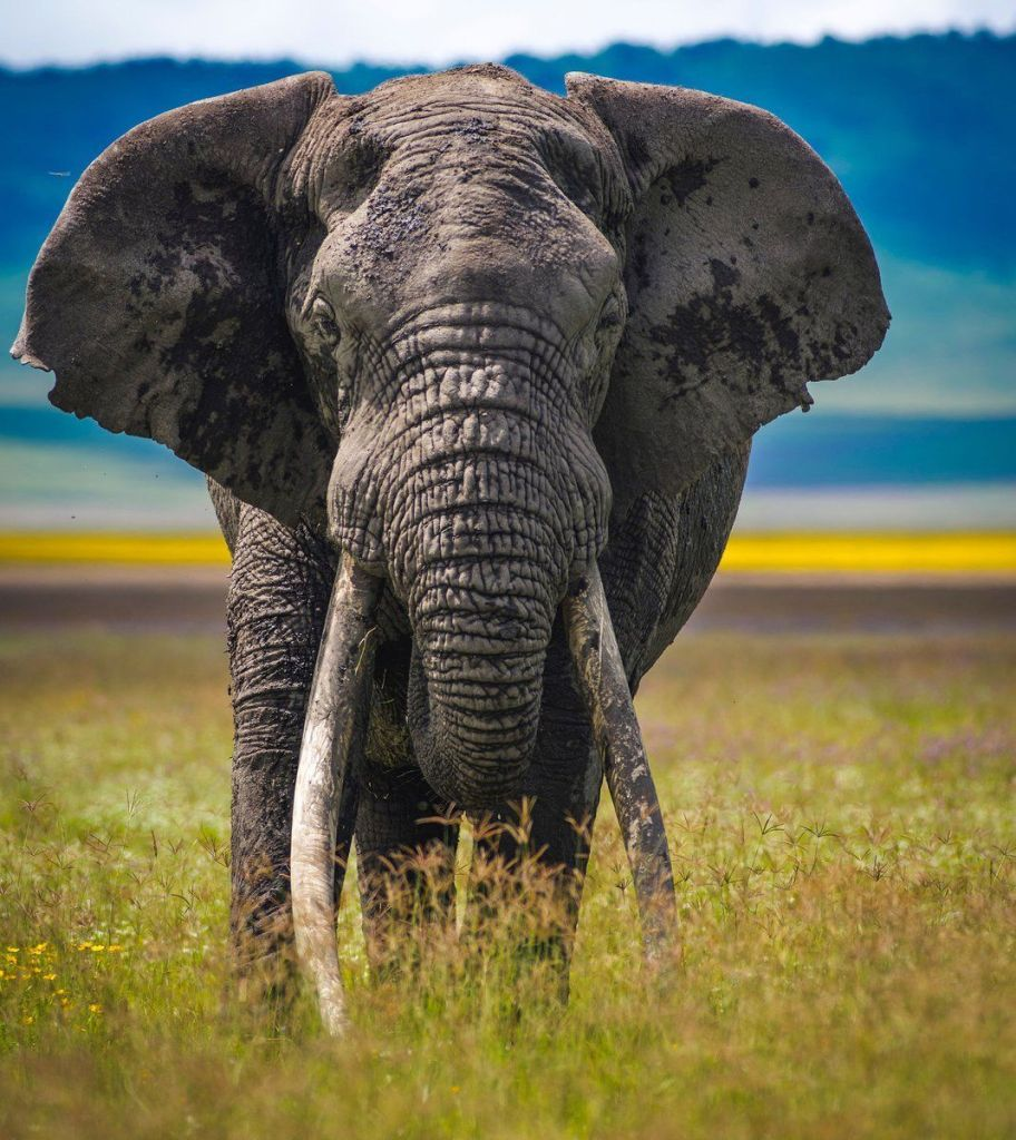 Elephant-Photography-13.jpg