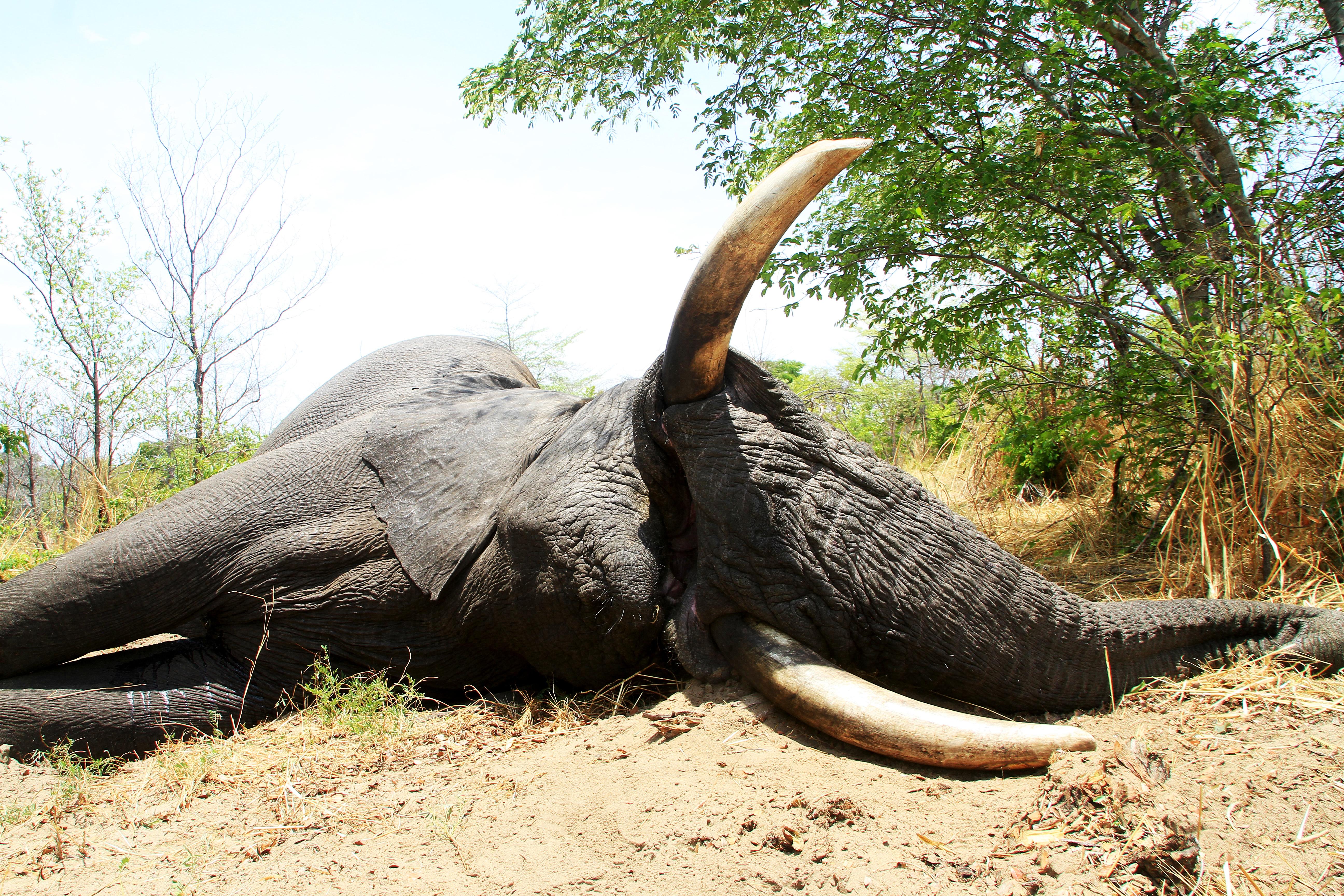 Elephant - Sasala.jpg