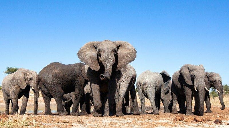 elephants-watering-hole_h.jpg
