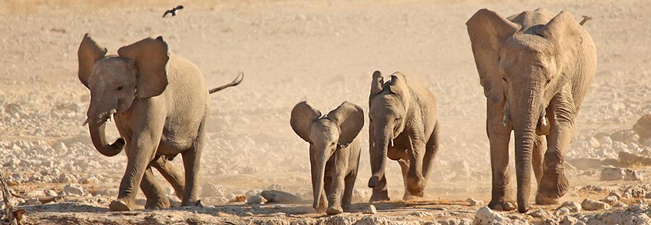 etosha-national-park-etosha-namibia-luxury-safari-ker-downey-elephant.jpg