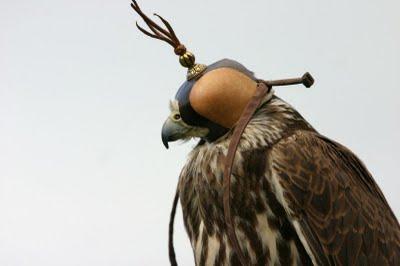 falcon_in_hood.jpg
