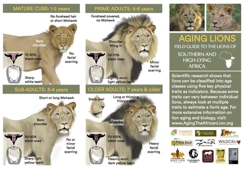 field-guide-to-aging-lions-highlands.jpg