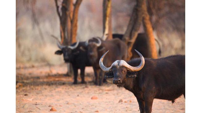 fight-on-for-buffalo-farming2017-08-280.jpg