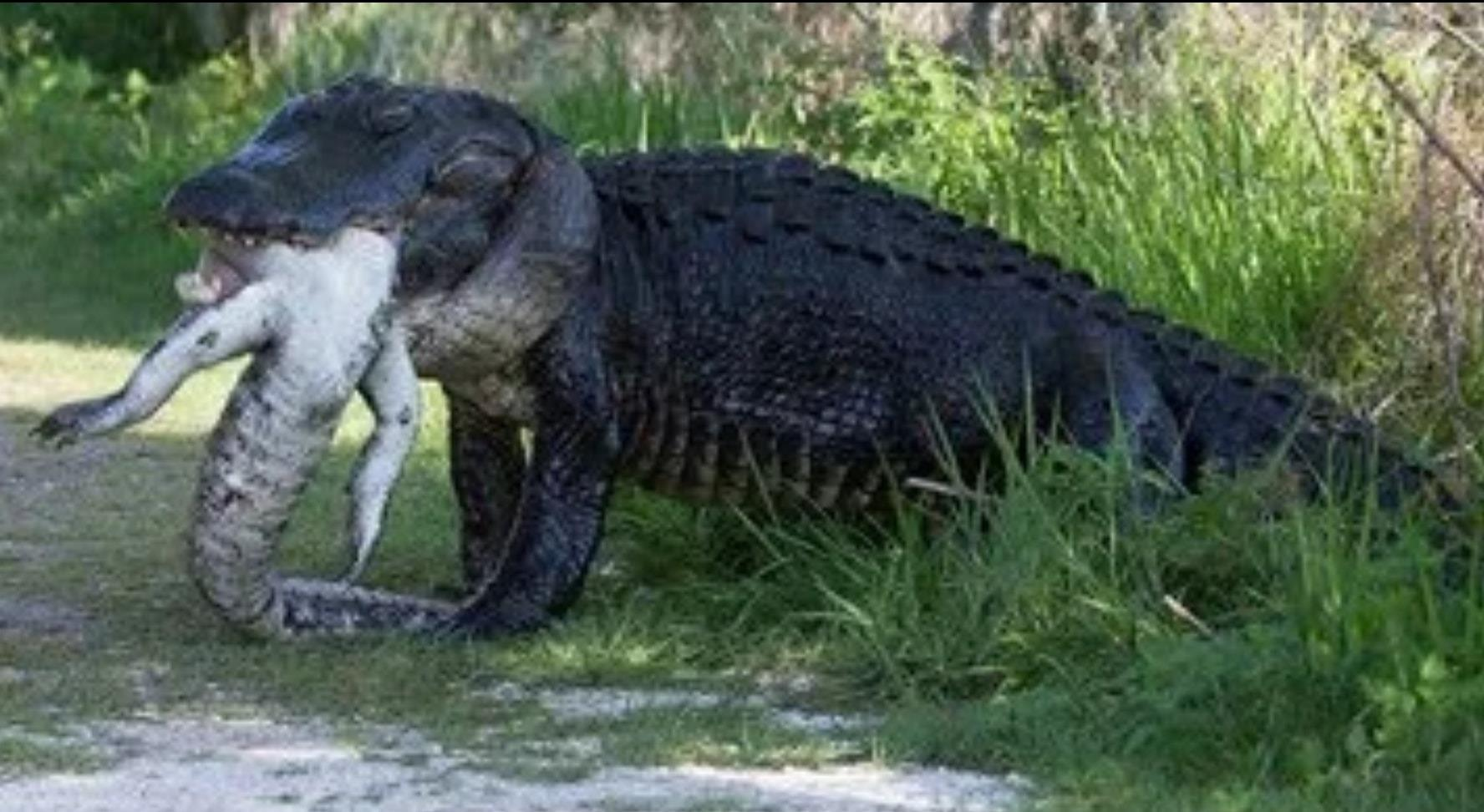 Florida gator moments 1.jpg