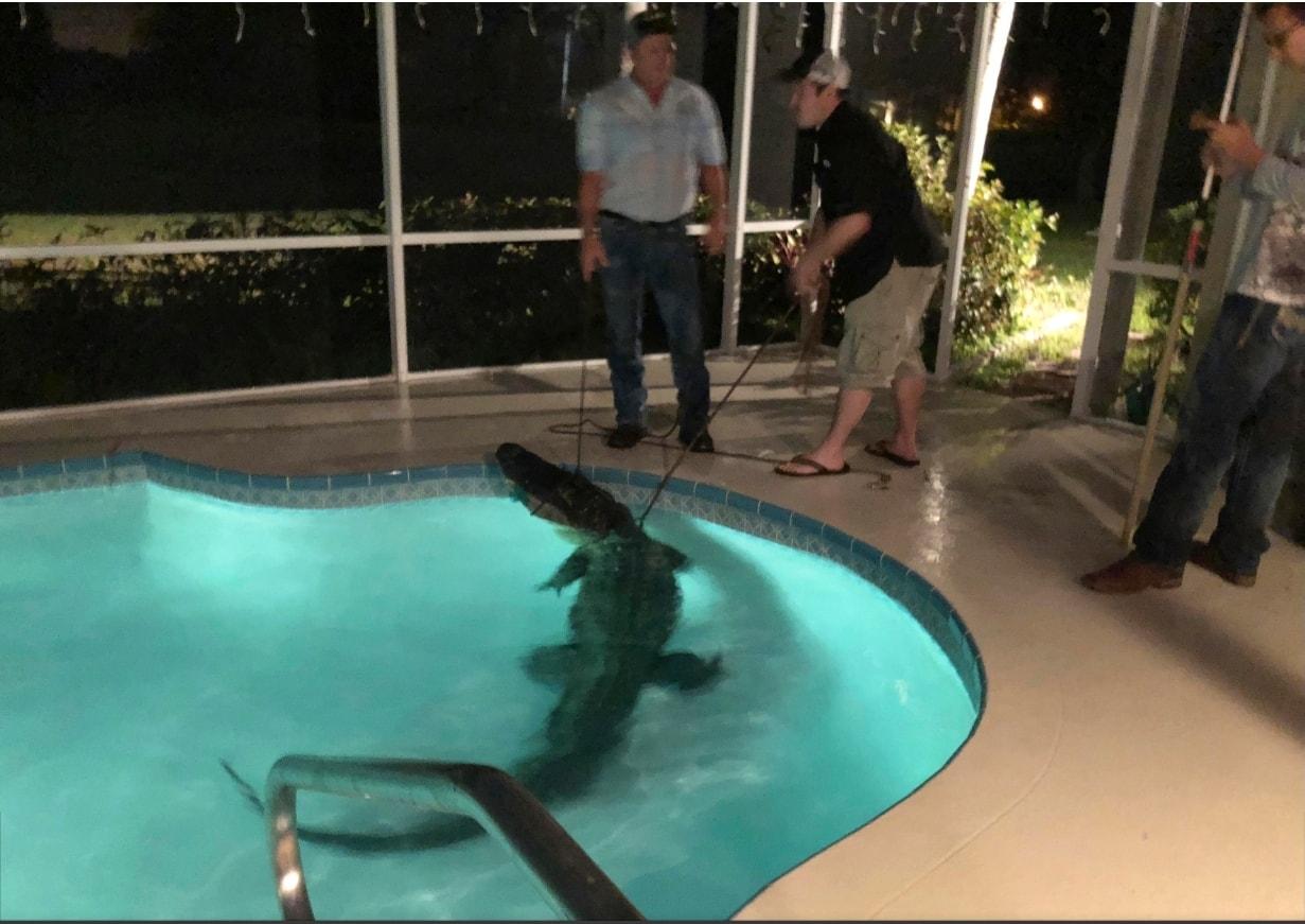 Florida gator moments 2.jpg