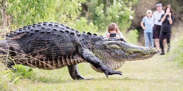 Florida gator moments 4.jpg