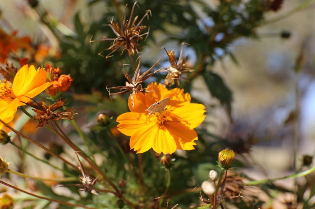 Flower2_zpsb64f499b.jpg